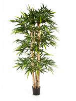 New giant bamboo 150cm