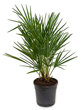 Exteriérové rastliny